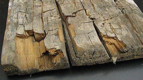 close up of wood suffering from dry rot