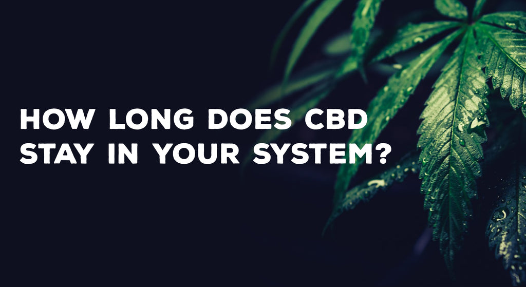 Featured image: How long does CBD stay in your system?