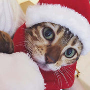 Christmas Pet Cat Dog Hat