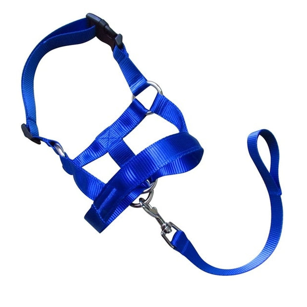 Leash Padded Head Collar