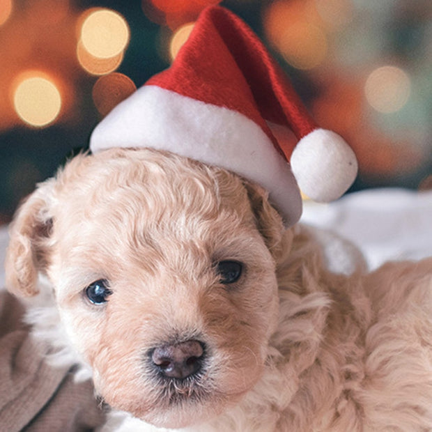 Christmas Small  Pet Dog