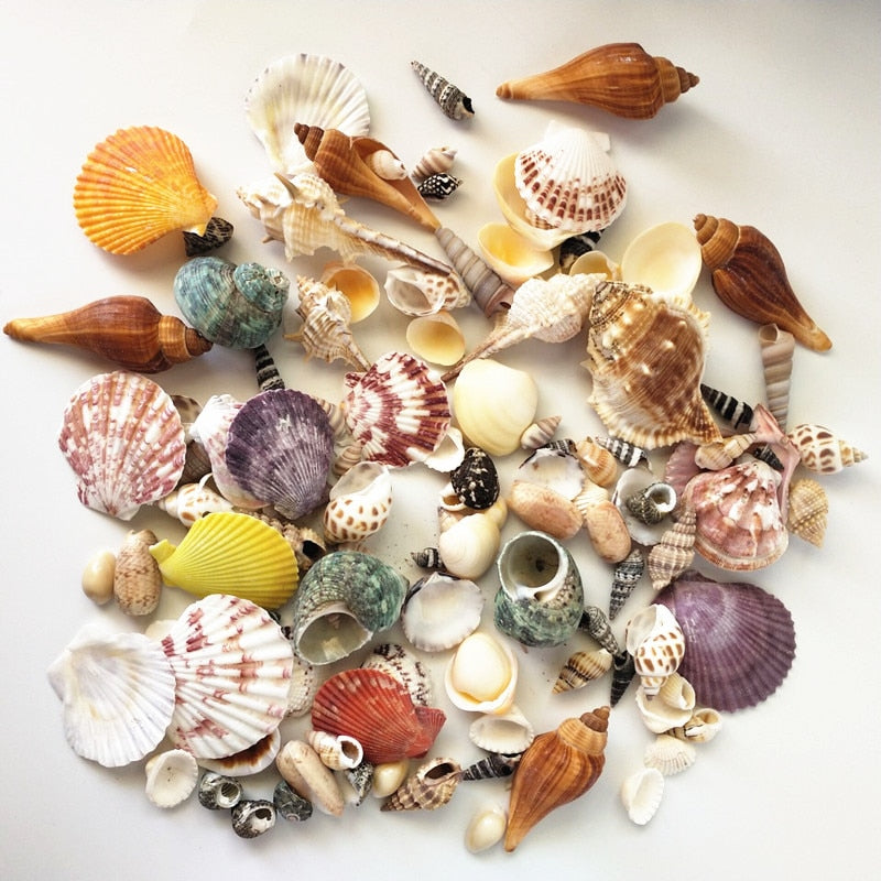 Ocean Sea Shells - Beach Decor (120 pcs.)