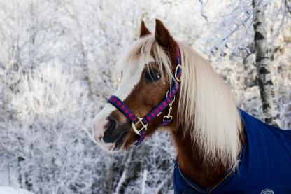 The Importance of Proper Horse Blanket Care