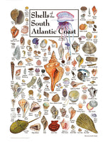 Shells of the South Atlantic Coast Puzzle