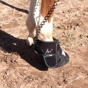 RevitaVet Hoof Pad Delivers Remarkable Results!