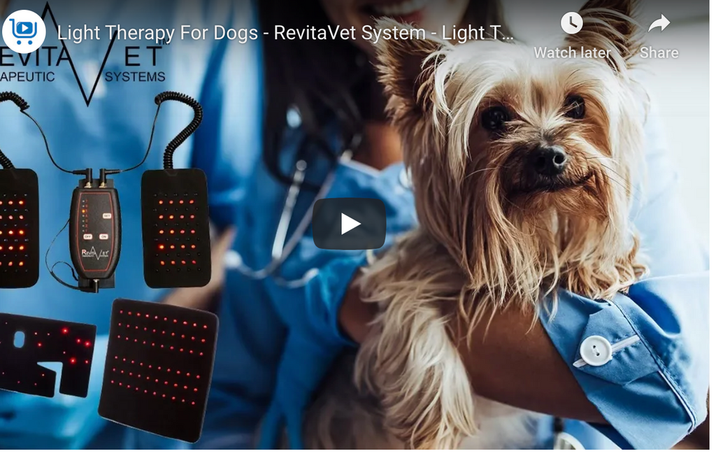 Have You Tried Infrared Light Therapy for Dogs?