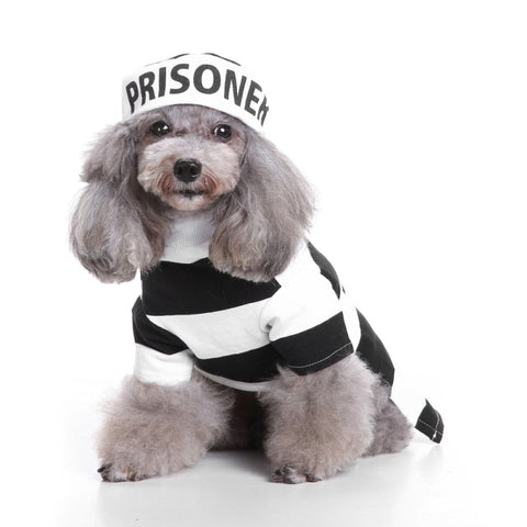 dog halloween costume prisoner
