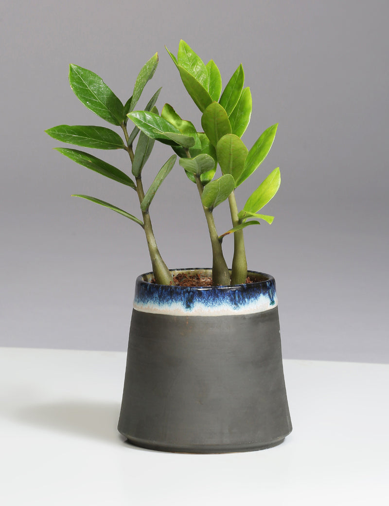 Charcoal slip handmade ceramic pot - Sweet Magnoliaa