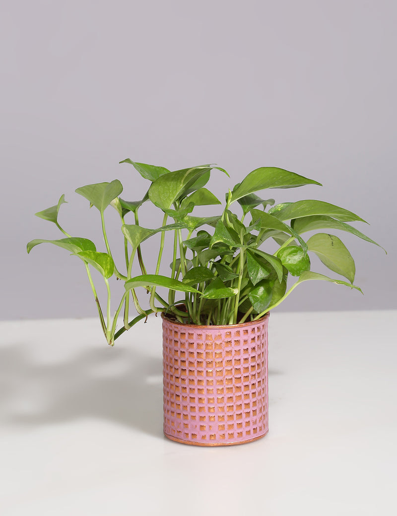 Embossed Vintage finish metal planter - Pink & Copper - Sweet Magnoliaa