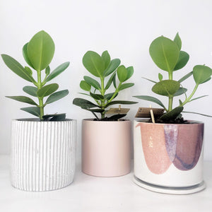 Choosing the right indoor plant for your space.