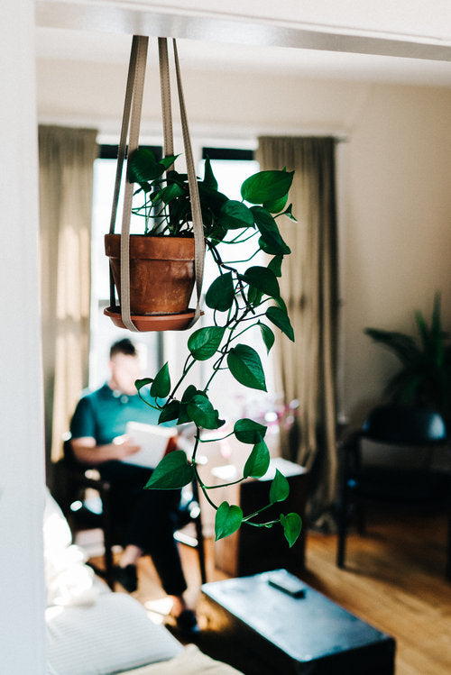 THE BEST 5 INDOOR PLANTS FOR YOUR FIRST APARTMENT