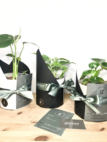 Indoor Plant Gift Delivery - Gift wrapping and gift note delivered Melbourne
