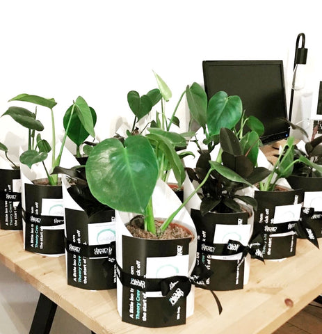 corporate gift delivery melbourne | gift delivery melbourne | plant delivery melbourne | indoor plant gift delivery melbourne | potted plant gifts delivered melbourne | melbourne gift delivery | corporate gifts