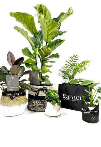 assorted indoor plants by garner plant delivery melbourne gift wrapping, hampers and and same day plant delivery