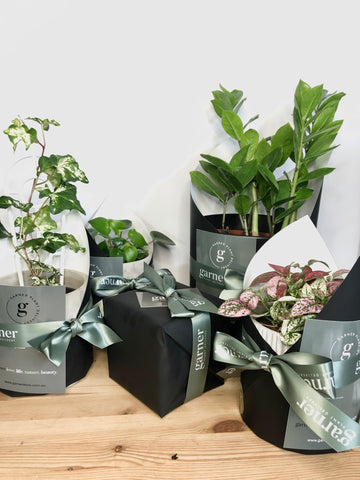 Plants for Delivery | Indoor plant gift delivery Melbourne