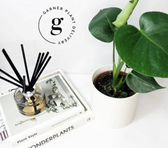 corporate gift delivery melbourne | gift delivery melbourne | plant gift delivery | potted plants delivered melbourne | indoor plant delivery melbourne | hampers melbourne | indoor plants gifts