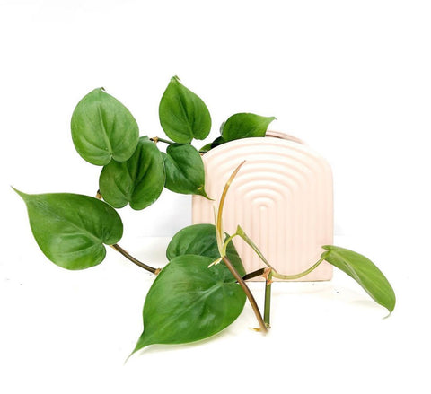 corporate gift delivery mebourne | corporate gifts melbourne | gift delivery melbourne | same day gift delivery melbourne | plant delivery melbourne | indoor plant gift delivery melbourne | house plant gift delivery