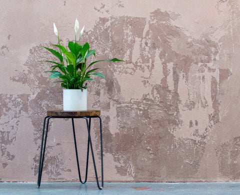 Peace LIly | Garner Plant Delivery | Peace Lily Toxic indoor plant | Indoor plant delivery Melbourne