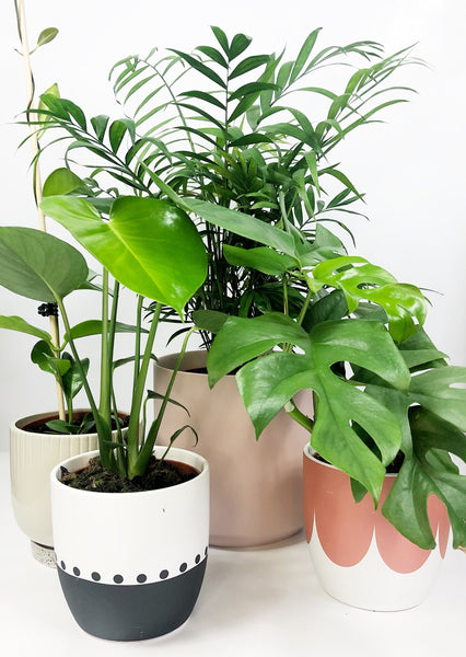 Online plant delivery | same day delivered plants Melbourne | potted plant gifts Melbourne | house plant gift delivery | indoor plant gift delivery Melbourne | plant gift hampers delivered Melbourne | plant subscriptions melbourne | plant delivery Melbourne