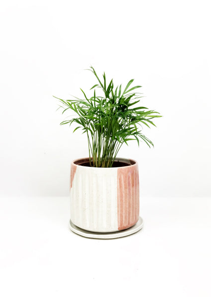 Hand thrown ceramic planter | Garner Plant Delivery Plum Bespoke Planter | indoor plant gift delivery | same day delivered plants Melbourne