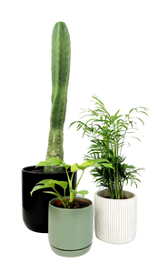 Cactus Indoor Plant Delivery | Cacti Melbourne 3000 | potted plant delivery Melbourne 3001 | cactus house plants | plant gift delivery Melbourne | indoor plant gifts | potted house plants | indoor potted plant | gift plants Melbourne | plant gift delivery
