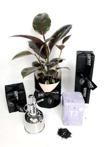 Mothers Day Plant Gift Hamper | same day plant delivery melbourne | plant gift delivery melbourne 3000 | indoor plants gifts | gift plants online | indoor plants gifts | indoor plants delivery | indoor flower plants online | potted plants online | mothers day flowers | plant delivery melbourne | T2 gift hamper | plant accessories | potted plants delivered melbourne
