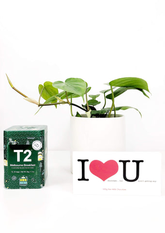 Valentines day gift delivery | Indoor plant gift hamper | same day plant delivery Melbourne | Garner Plant Delivery | indoor plant gift hampers Melbourne | valentines day gift delivery Melbourne | potted plant delivery Melbourne