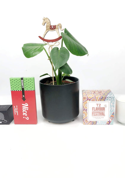 indoor plants gifts | same day plant delivery Melbourne | potted plants online
