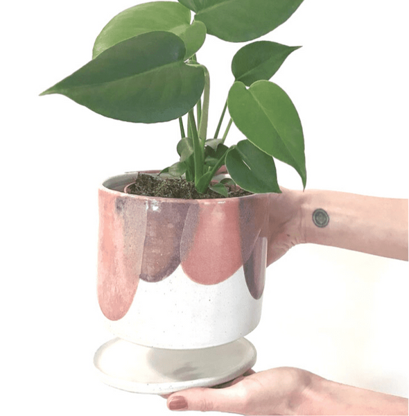 Monstera Indoor Plant | indoor plant pots | ceramic plant pots | small indoor plants | indoor house plants |Bespoke Plum hand thrown planter | Same day plant delivery Melbourne | indoor plant gift delivery Melbourne | House plant online store | gift plants online