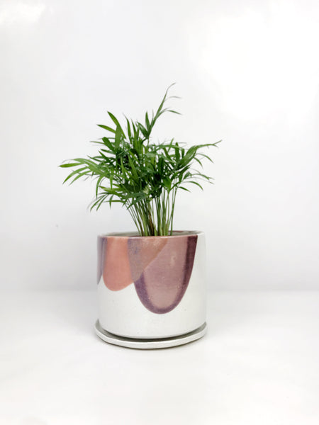 Indoor plants delivered Melbourne | same day delivered plant gifts Melbourne | hand thrown ceramic planters melbourne | indoor plant gift delivery