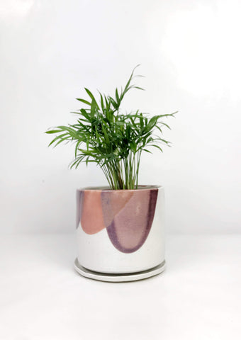 Garner Plant Delivery | Indoor plants online same day delivery Melbourne | Potted plant gifts Melbourne Australia | Hand thrown ceramic planters gift delivery