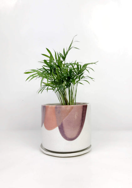 Garner Plant Delivery | Same day delivered indoor plants Melbourne | potted plant gifts delivery | hand thrown ceramic planter Melbourne
