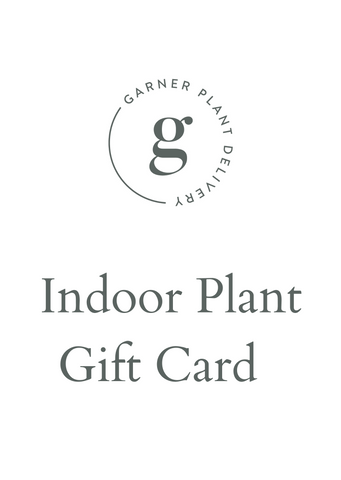 Indoor plant  gift card Melbourne | indoor plant delivery Melbourne | house plant gift card | house plant subscription | house plant gift delivery Melbourne | potted plant gift card | plant gift card Melbourne | plant delivery Melbourne |same day plant delivery melbourne | potted plants online