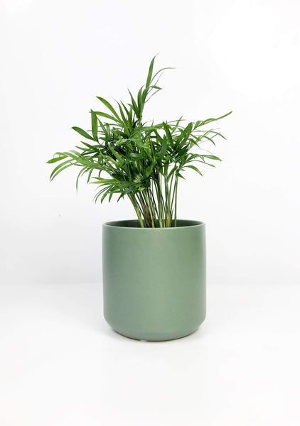 Indoor plant delivery Melbourne | Gift plants delivery Melbourne Australia | ceramic plant pot | indoor plants | small indoor plants | indoor plant pots | best indoor plants | air purifying indoor plants  | Online indoor plant store