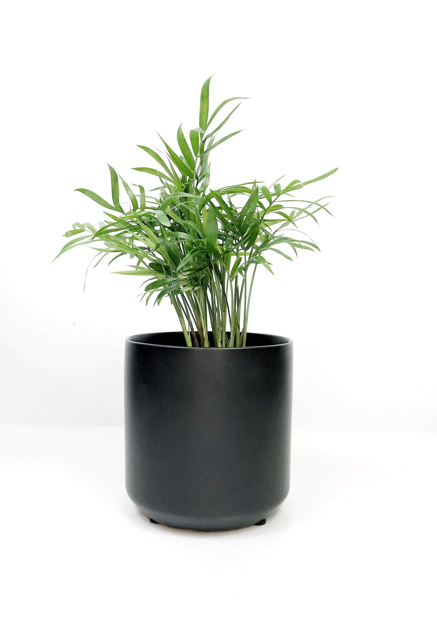 Indoor plant delivery Melbourne | potted plants delivered same day melbourne | gift plants | house plants | office plants