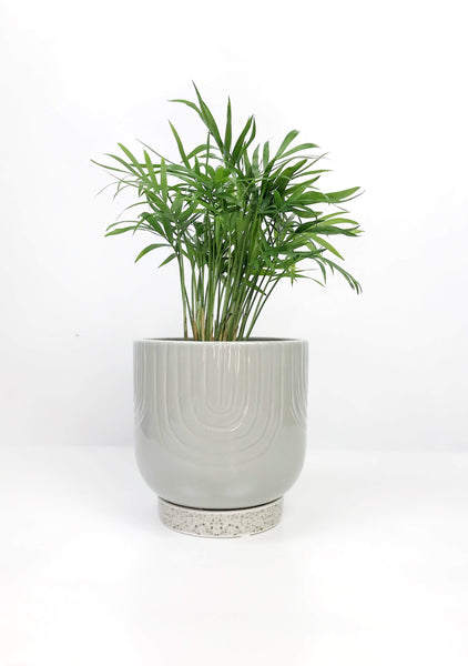 indoor plant delivery Melbourne | online indoor plant store Melbourne Australia | potted plants delivered | same day delivery plants