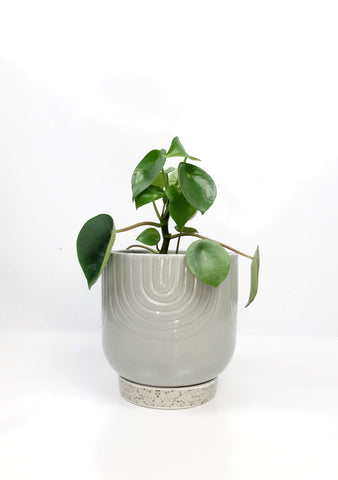 Potted plant gift delivery Melbourne | Garner Plant Delivery | Gift hampers indoor plants same day delivery Melbourne
