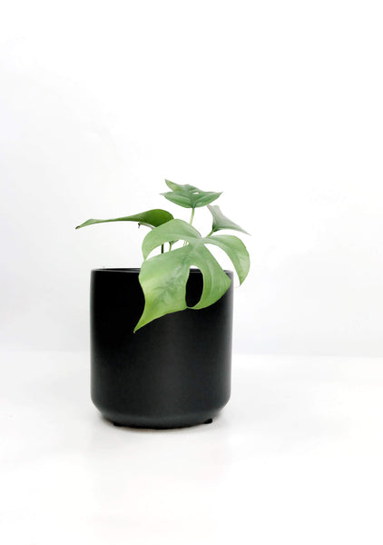 potted plants online Melbourne | plants same day delivered Melbourne | indoor plant gifts hampers delivery | house plant mini monstera | office plant delivery