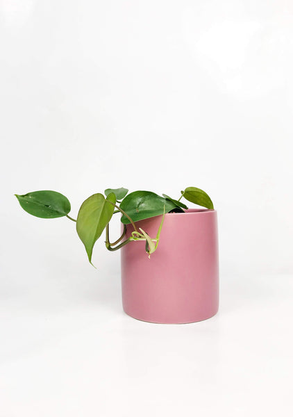 Indoor plant gifts | Garner Plant Delivery | Same day delivered plant gifts