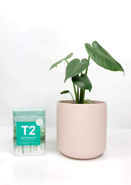 gift plants online | indoor plant pots | best indoor plants | ceramic plant pots |plant delivery Melbourne | plant gift delivery Melbourne | indoor plant delivery melbourne | same day plant delivery Melbourne