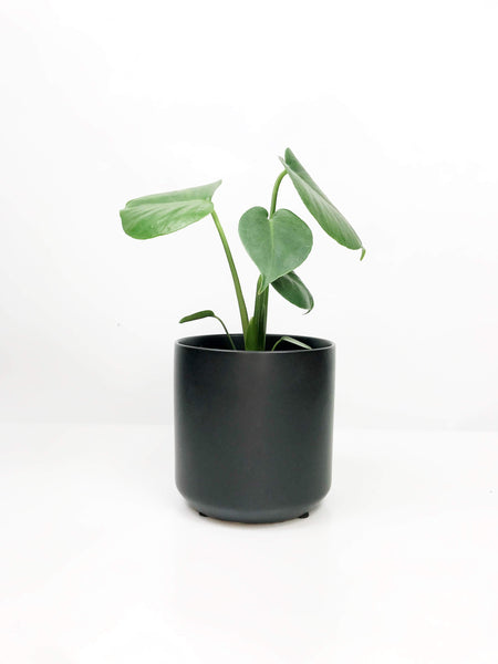 Garner Plant Delivery | indoor potted plants gift delivery Melbourne | same day delivered plants online | flower plants | house plants Melbourne