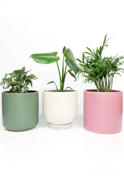 indoor plant gift delivery Melbourne | same day delivery potted plants | indoor plants delivered Melbourne Australia | gift flower plants
