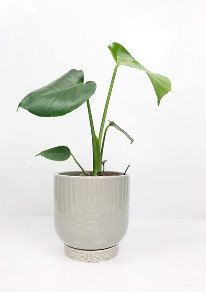 indoor plant delivery Melbourne | gift plants online | indoor plant store | house plant gift delivery | same day plant delivery Melbourne | indoor flower plants online