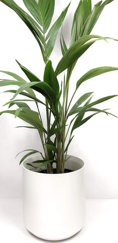 Potted plant delivery Melbourne | indoor plants delivered | house plants online