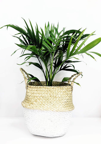 Garner Plant Delivery | indoor plant delivery Melbourne | same day plant delivery Melbourne | plant gifts online