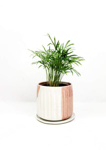 Indoor Plant Delivery Melbourne | Garner Plant Delivery | plant gifts Melbourne | plant delivery melbourne | plant delivery online | gift plants online | indoor plant store | indoor plants gifts | chamaedorea plant indoor potted plant | hand thrown ceramic planter Melbourne | hand made gifts melbourne | ceramic pot plants | indoor garden | indoor plants online | indoor house plants | air purifying plants | low light plants |ceramic planters