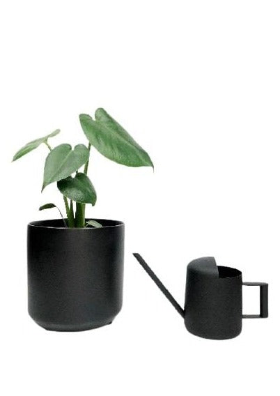 potted plants delivered melbourne | plant gifts melbourne | plant gift delivery melbourne | indoor plant deoivery Melbourne | plants delivered 3000 | Plants across melbourne | Garner Plant Delivery | Same day palnt delivery | indoor plant pots | garden pots | garner planters | garden pots | indoor plant pots