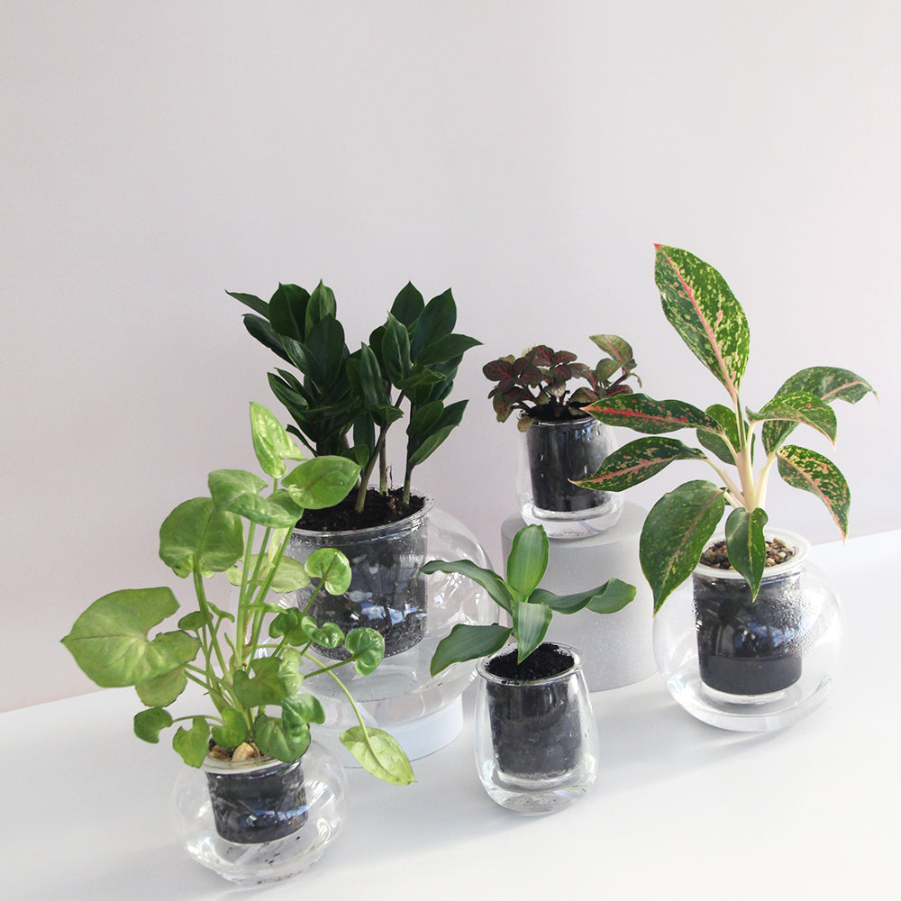 Cup-O-Flora Self Watering Pots