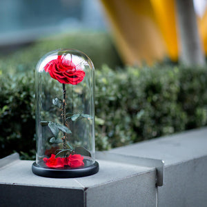 Forever Rose in Cloche