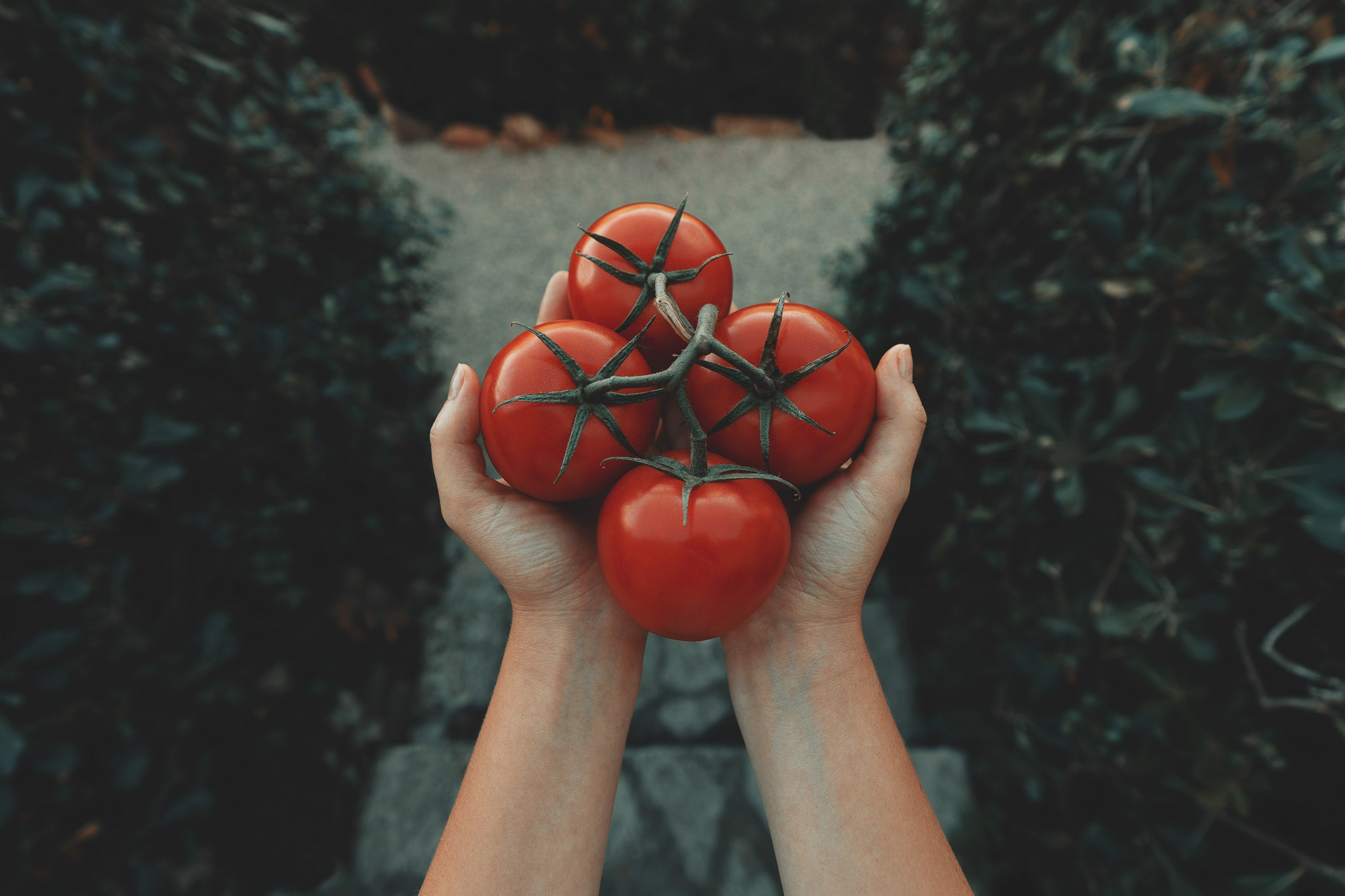 buy organic tomato online london uk